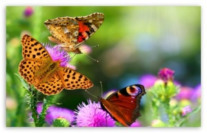 butterflies_and_flowers-t2